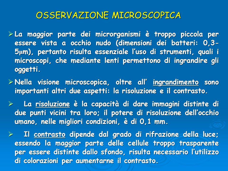 OSSERVAZIONE MICROSCOPICA La maggior parte dei microrganismi è troppo piccola per essere vista a occhio nudo (dimensioni dei batteri: 0,3- 5 μ m), per
