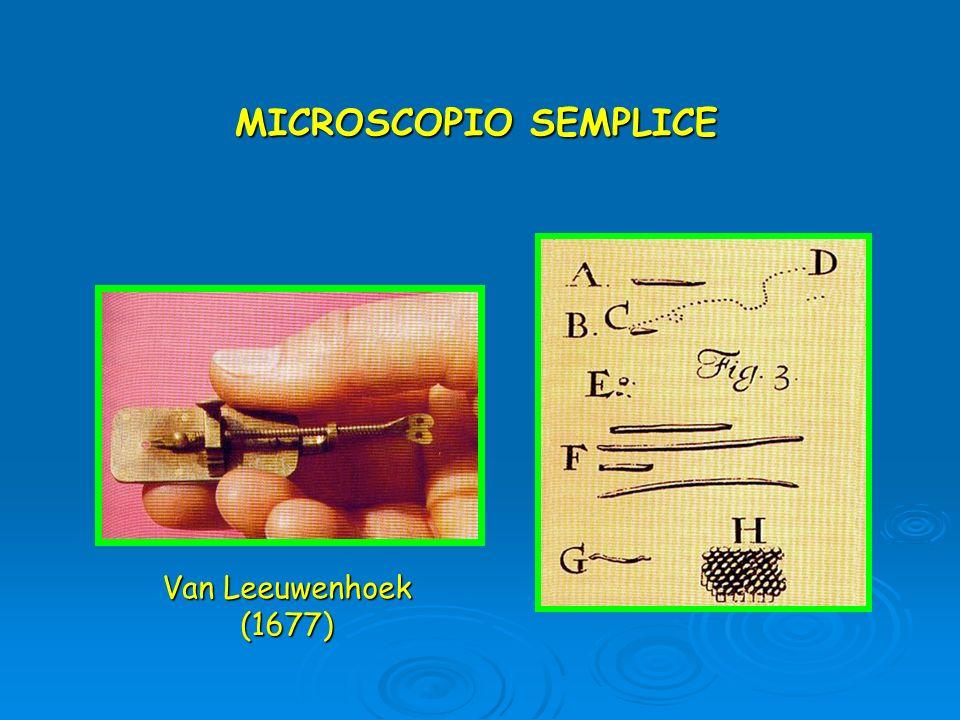 MICROSCOPIO SEMPLICE Van Leeuwenhoek (1677)