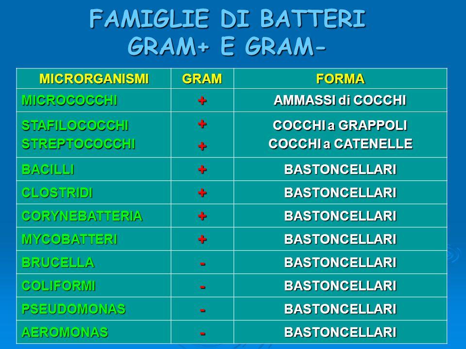 FAMIGLIE DI BATTERI GRAM+ E GRAM- MICRORGANISMIGRAMFORMA MICROCOCCHI+ AMMASSI di COCCHI STAFILOCOCCHISTREPTOCOCCHI++ COCCHI a GRAPPOLI COCCHI a CATENE