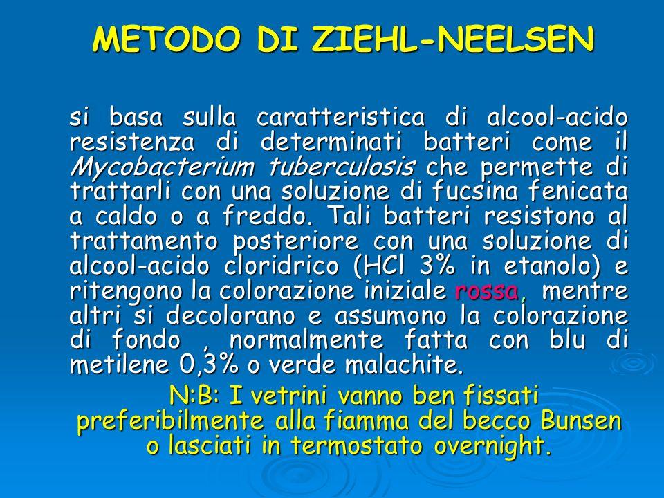 METODO DI ZIEHL-NEELSEN si basa sulla caratteristica di alcool-acido resistenza di determinati batteri come il Mycobacterium tuberculosis che permette