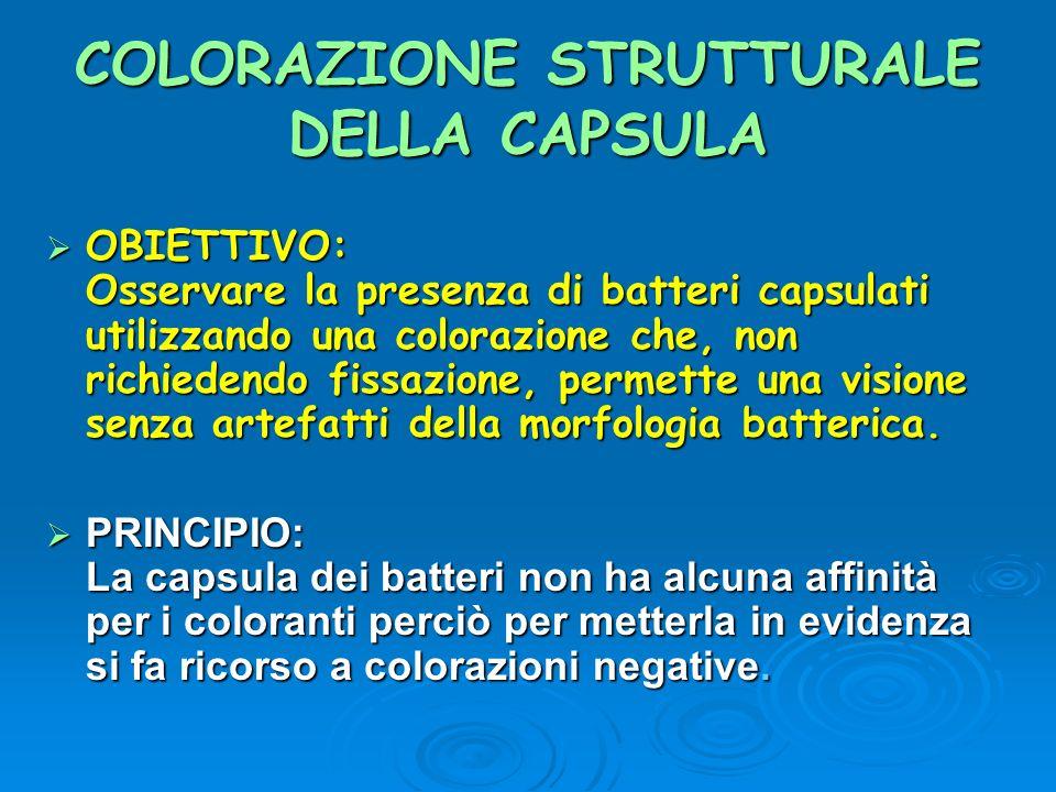 COLORAZIONE STRUTTURALE DELLA CAPSULA OBIETTIVO: Osservare la presenza di batteri capsulati utilizzando una colorazione che, non richiedendo fissazion