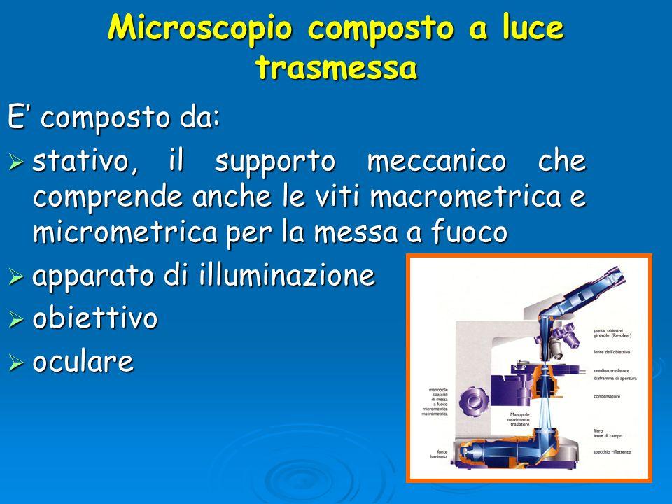 Microscopio composto a luce trasmessa E composto da: stativo, il supporto meccanico che comprende anche le viti macrometrica e micrometrica per la mes