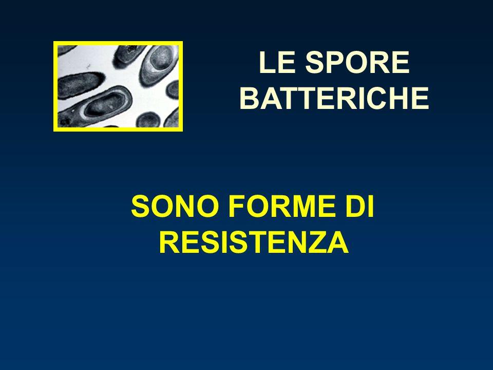 SONO FORME DI RESISTENZA LE SPORE BATTERICHE