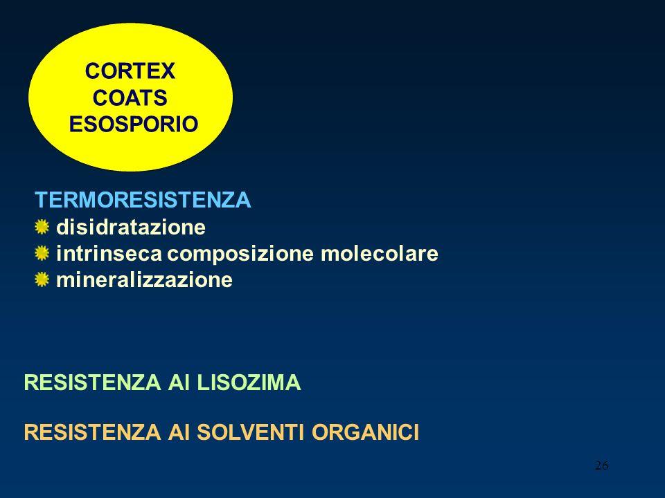 26 CORTEX COATS ESOSPORIO TERMORESISTENZA disidratazione intrinseca composizione molecolare mineralizzazione RESISTENZA Al LISOZIMA RESISTENZA AI SOLV