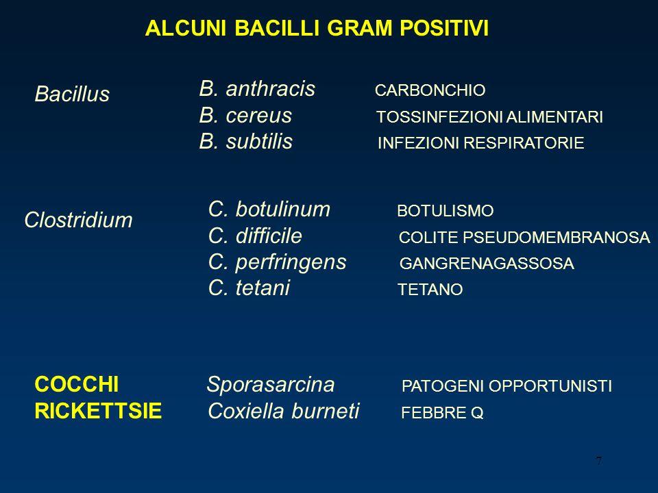 7 ALCUNI BACILLI GRAM POSITIVI Bacillus B. anthracis CARBONCHIO B. cereus TOSSINFEZIONI ALIMENTARI B. subtilis INFEZIONI RESPIRATORIE Clostridium C. b