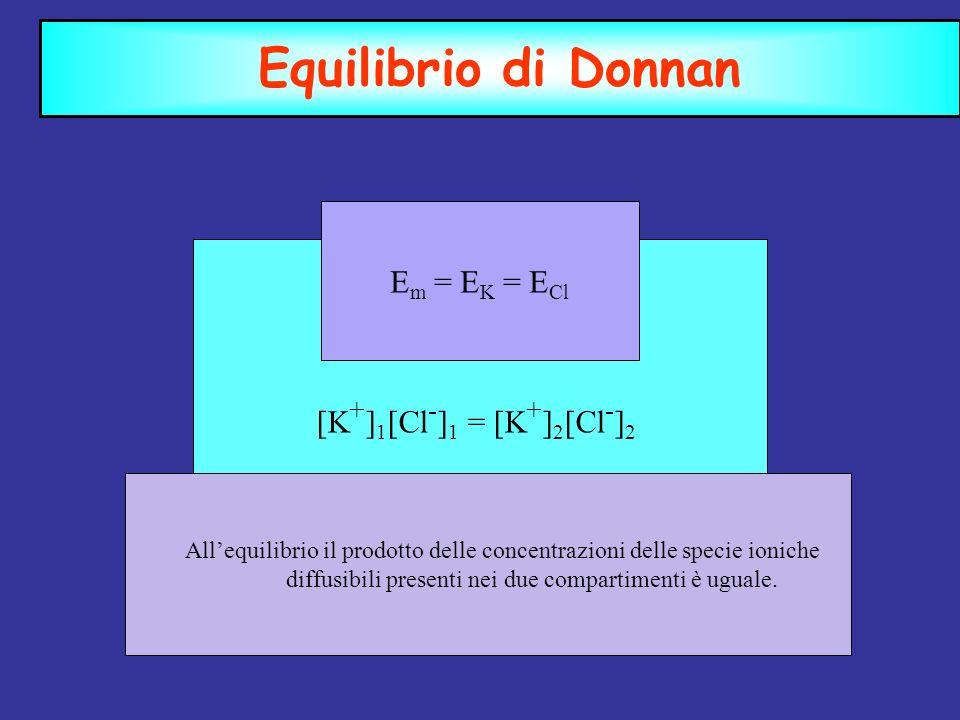 Equilibrio di Donnan [K + ] 1 [Cl - ] 1 = [K + ] 2 [Cl - ] 2 Allequilibrio il prodotto delle concentrazioni delle specie ioniche diffusibili presenti nei due compartimenti è uguale.