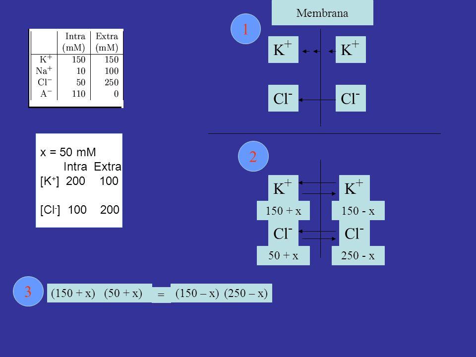 Membrana K+K+ K+K+ Cl - 1 2 (50 + x) 250 - x Cl - K+K+ K+K+ 150 + x150 - x (150 + x) = 50 + x (250 – x)(150 – x) 3 x = 50 mM Intra Extra [K + ] 200 100 [Cl - ] 100 200
