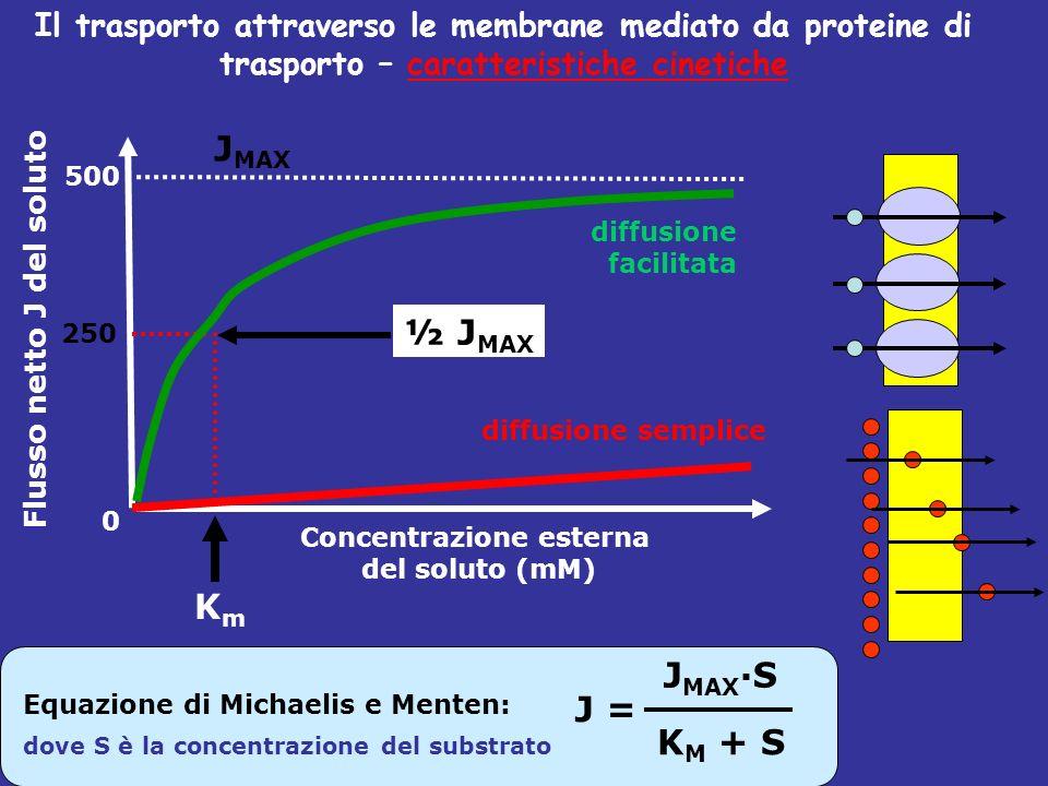 J MAX 0 250 500 Flusso netto J del soluto Concentrazione esterna del soluto (mM) KmKm ½ J MAX Il trasporto attraverso le membrane mediato da proteine