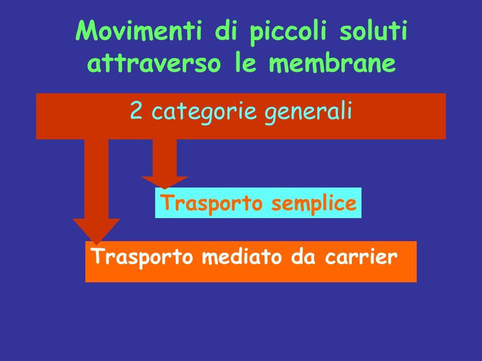 Diffusione Facilitata Trasporto Attivo Il movimento ottenuto per mezzo delle proteine carrier è detto TRASPORTO MEDIATO.