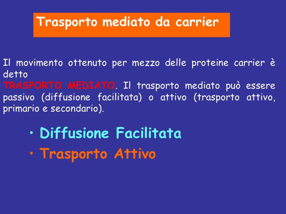 Diffusione Facilitata Trasporto Attivo Il movimento ottenuto per mezzo delle proteine carrier è detto TRASPORTO MEDIATO. Il trasporto mediato può esse