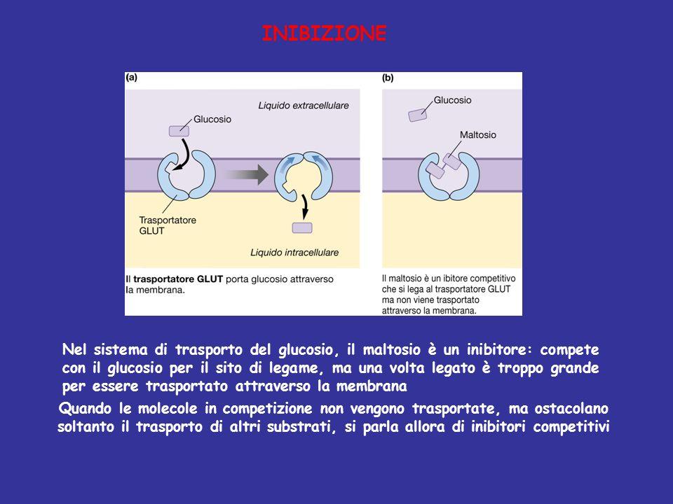 Diffusione Semplice Diffusione Facilitata DIFFUSIONE Non richiede ulteriore energia oltre a quella derivata dal movimento molecolare Molecole attraversano il doppio strato lipidico Caratteristiche Strutturali Trasporto mediato da proteine di membrana Trasporto Attivo PRIMARIO Richiede ATP Trasporto Attivo SECONDARIO Crea gradienti per Vescicole rivestite da membrana ESOCITOSI FAGOCITOSI ENDOCITOSI