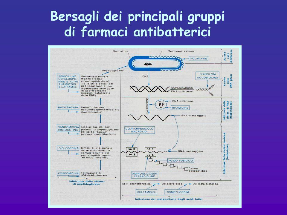 Bersagli dei principali gruppi di farmaci antibatterici