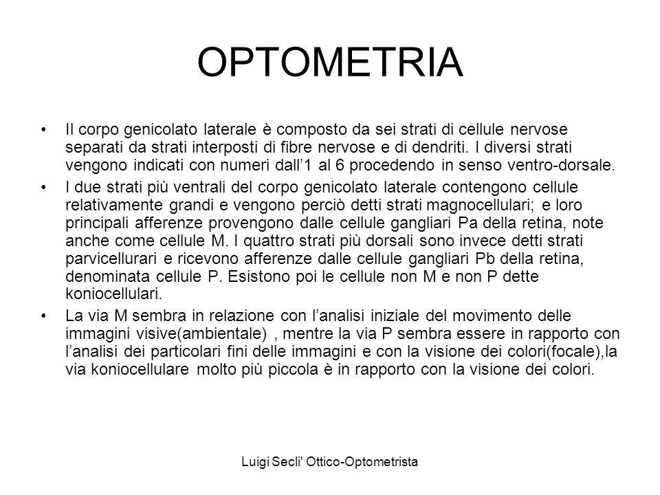 Luigi Secli' Ottico-Optometrista OPTOMETRIA Il corpo genicolato laterale è composto da sei strati di cellule nervose separati da strati interposti di
