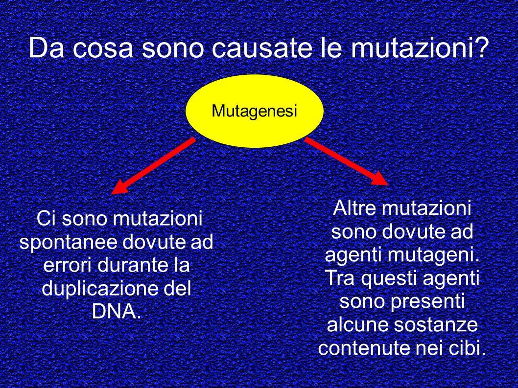Da cosa sono causate le mutazioni? Ci sono mutazioni spontanee dovute ad errori durante la duplicazione del DNA. Mutagenesi Altre mutazioni sono dovut