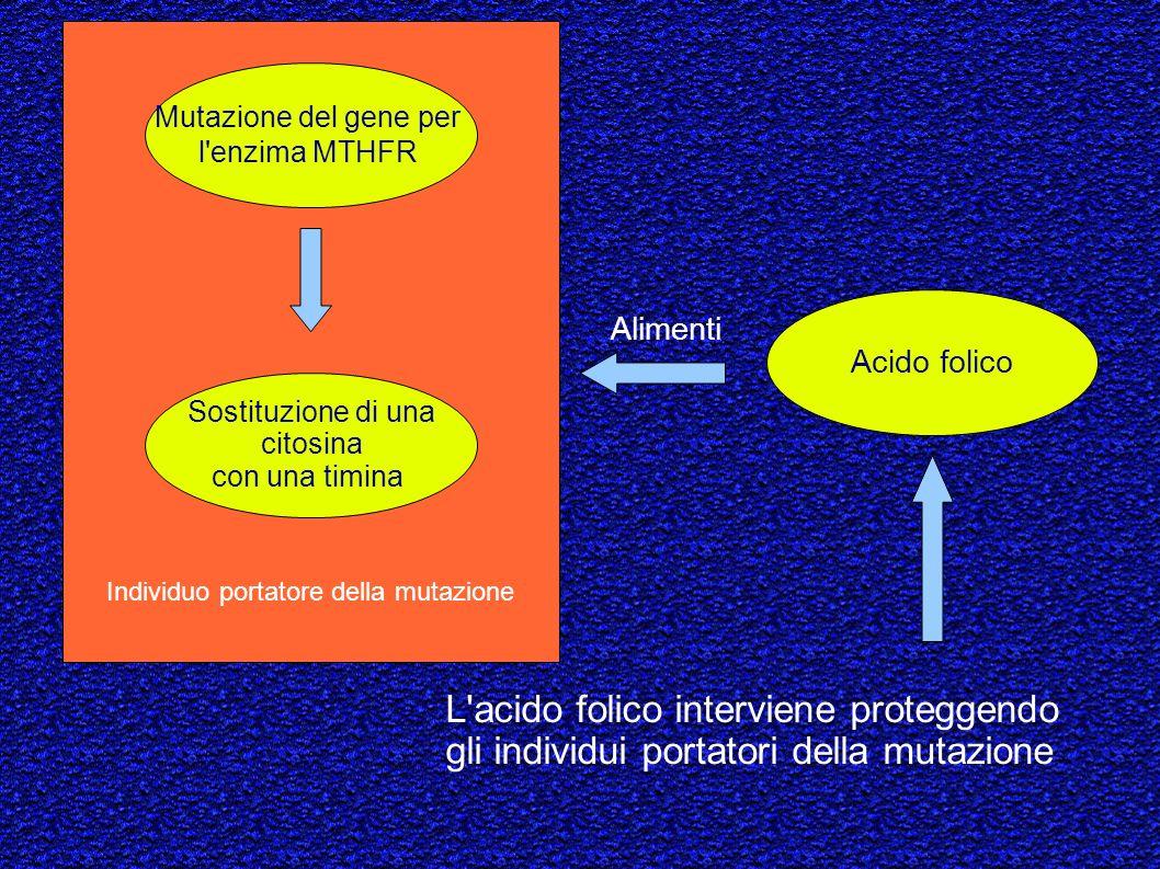 Individuo portatore della mutazione Sostituzione di una citosina con una timina Mutazione del gene per l'enzima MTHFR Acido folico L'acido folico inte