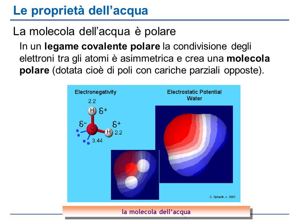 La molecola dellacqua è polare Le proprietà dellacqua la molecola dellacqua In un legame covalente polare la condivisione degli elettroni tra gli atom