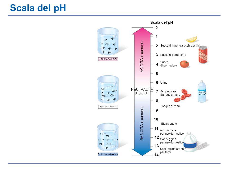 Scala del pH Acqua Soluzione basica Schiuma detergente per forni Soluzione acida Soluzione neutra Scala del pH 0 1 2 3 4 5 6 7 8 9 10 11 12 Succo di l