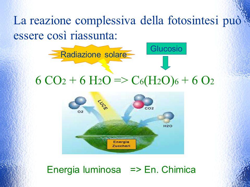 La reazione complessiva della fotosintesi può essere così riassunta: 6 CO 2 + 6 H 2 O => C 6 (H 2 O) 6 + 6 O 2 Glucosio Radiazione solare Energia lumi