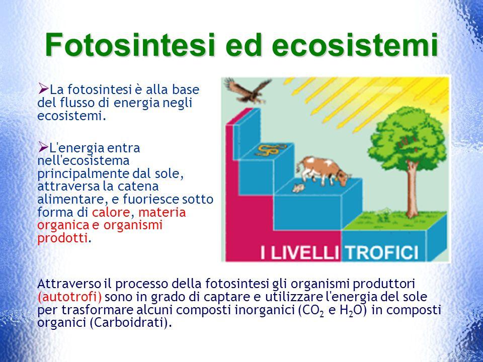 Fotosintesi ed ecosistemi La fotosintesi è alla base del flusso di energia negli ecosistemi. L'energia entra nell'ecosistema principalmente dal sole,