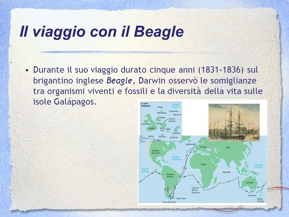 Durante il suo viaggio durato cinque anni (1831-1836) sul brigantino inglese Beagle, Darwin osservò le somiglianze tra organismi viventi e fossili e l