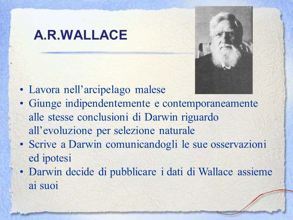 A.R.WALLACE Lavora nellarcipelago malese Giunge indipendentemente e contemporaneamente alle stesse conclusioni di Darwin riguardo allevoluzione per se