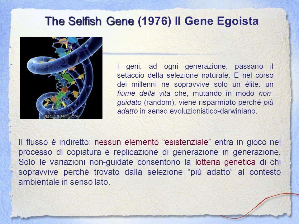 The Selfish Gene The Selfish Gene (1976) Il Gene Egoista I geni, ad ogni generazione, passano il setaccio della selezione naturale. E nel corso dei mi