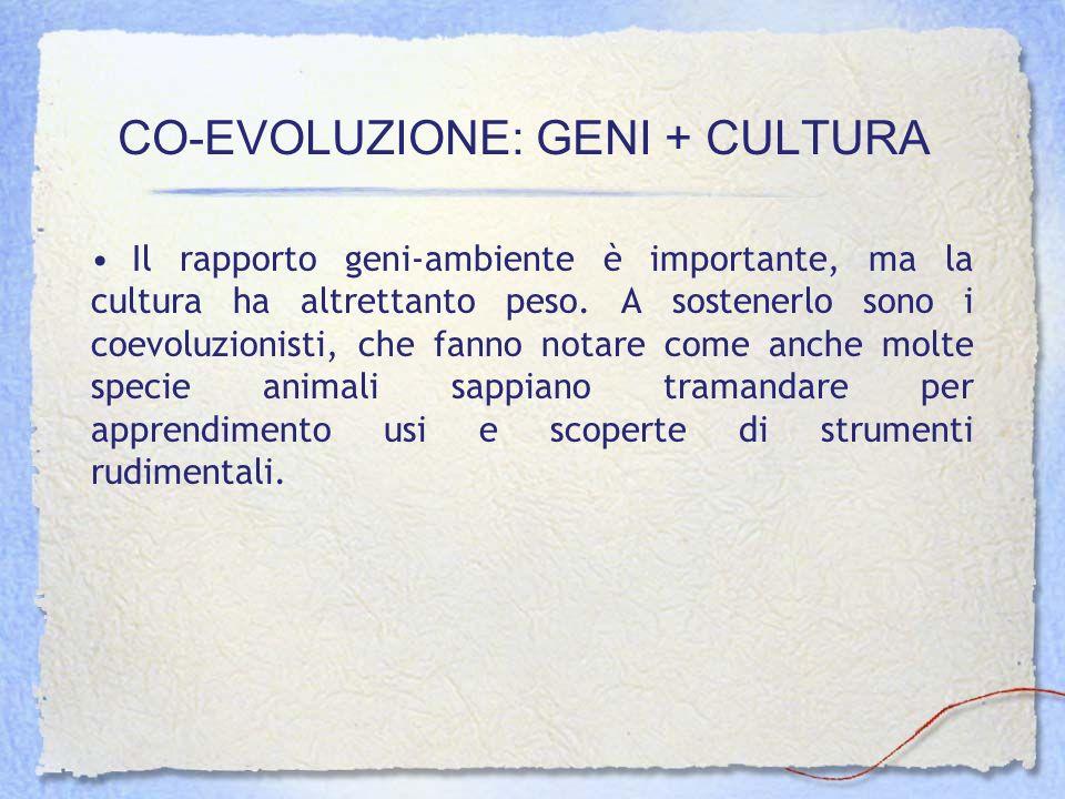 CO-EVOLUZIONE: GENI + CULTURA Il rapporto geni-ambiente è importante, ma la cultura ha altrettanto peso. A sostenerlo sono i coevoluzionisti, che fann