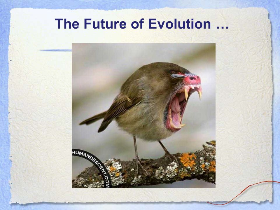 The Future of Evolution …