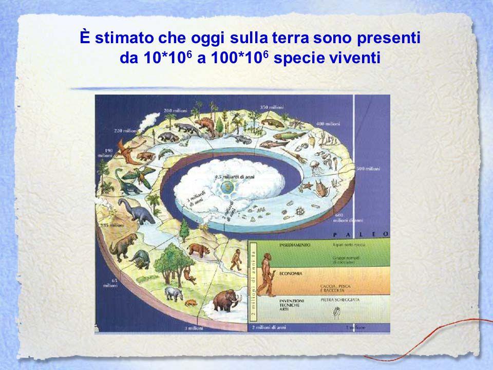 È stimato che oggi sulla terra sono presenti da 10*10 6 a 100*10 6 specie viventi