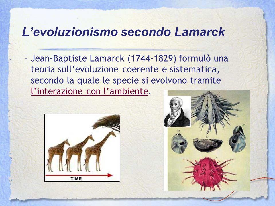 –Jean-Baptiste Lamarck (1744-1829) formulò una teoria sullevoluzione coerente e sistematica, secondo la quale le specie si evolvono tramite linterazio