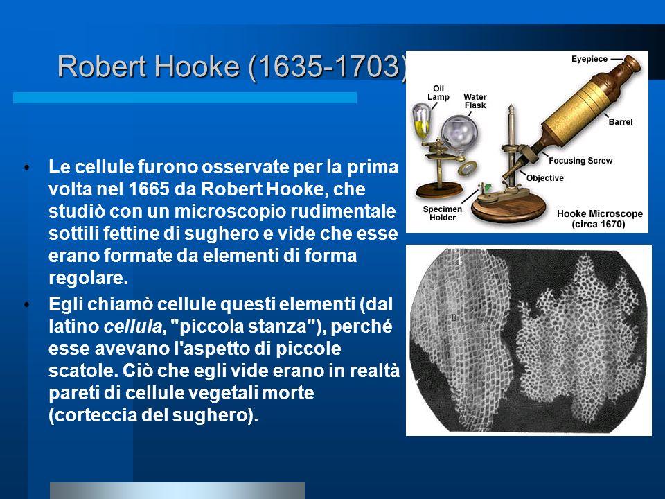 Robert Hooke (1635-1703) Le cellule furono osservate per la prima volta nel 1665 da Robert Hooke, che studiò con un microscopio rudimentale sottili fe