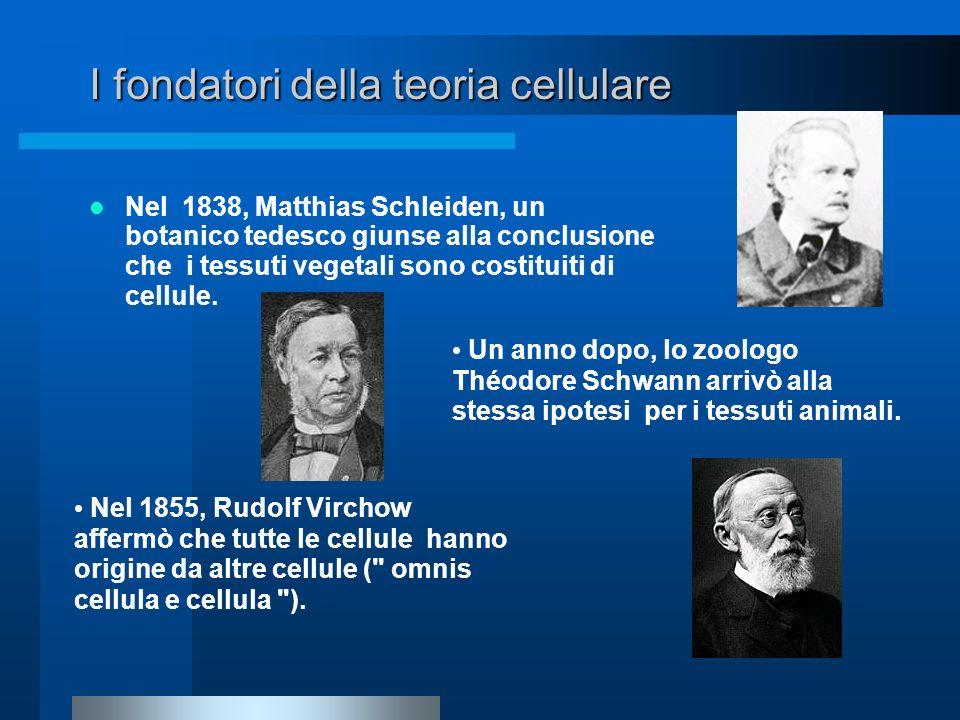I fondatori della teoria cellulare Nel 1838, Matthias Schleiden, un botanico tedesco giunse alla conclusione che i tessuti vegetali sono costituiti di
