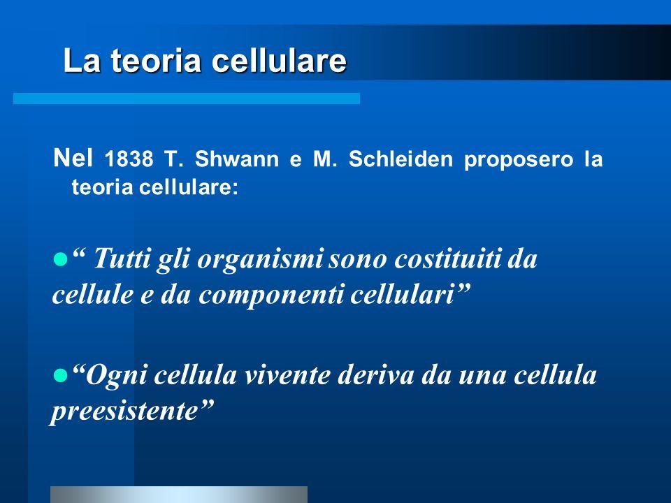Nel 1838 T. Shwann e M. Schleiden proposero la teoria cellulare: La teoria cellulare Ogni cellula vivente deriva da una cellula preesistente Tutti gli