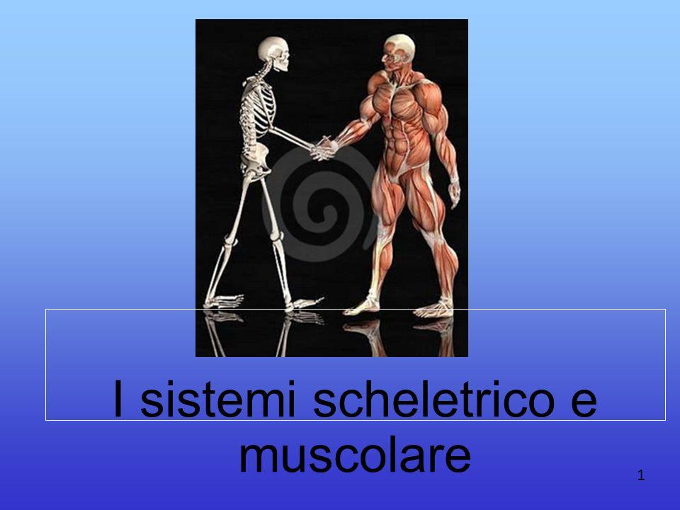1 I sistemi scheletrico e muscolare
