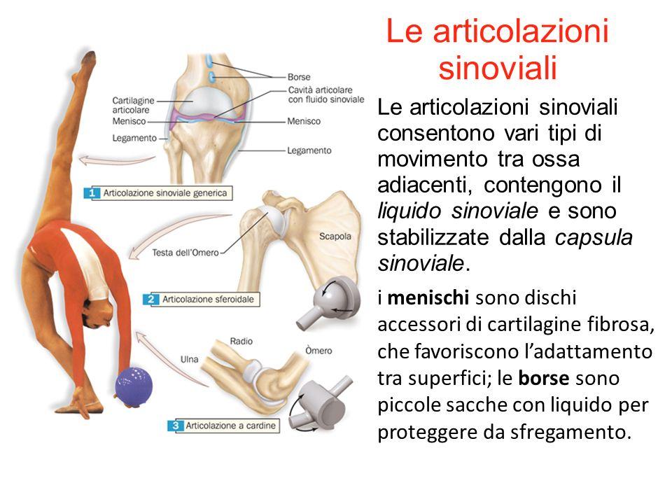 Le articolazioni sinoviali consentono vari tipi di movimento tra ossa adiacenti, contengono il liquido sinoviale e sono stabilizzate dalla capsula sin