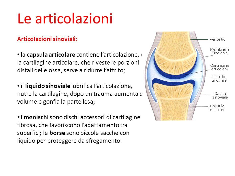 Le articolazioni Articolazioni sinoviali: la capsula articolare contiene larticolazione, e la cartilagine articolare, che riveste le porzioni distali