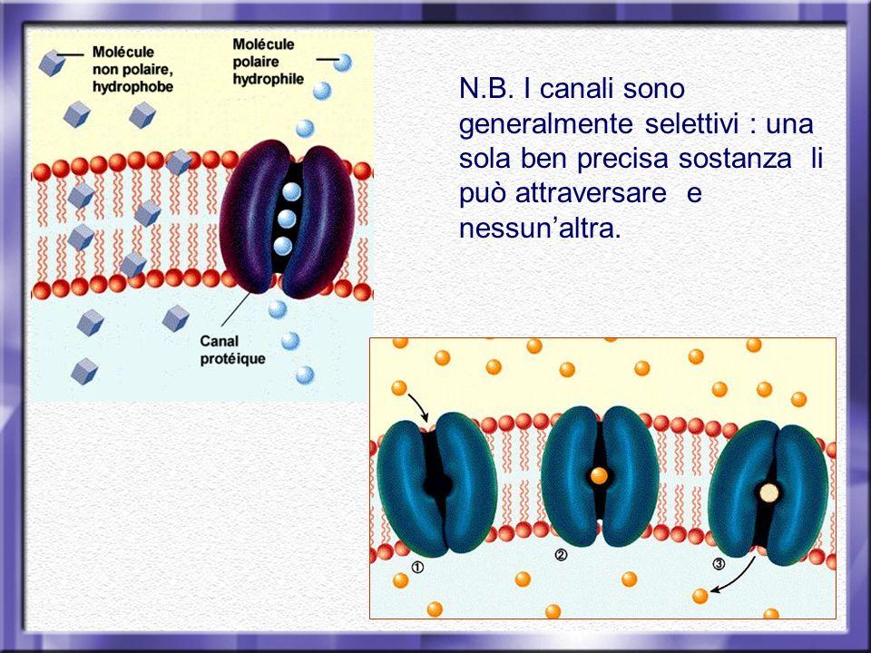 N.B. I canali sono generalmente selettivi : una sola ben precisa sostanza li può attraversare e nessunaltra.