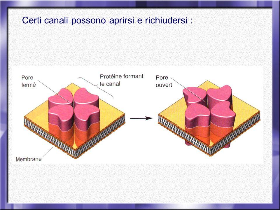 Esempio: Canale ionico che permette il passaggio di anioni
