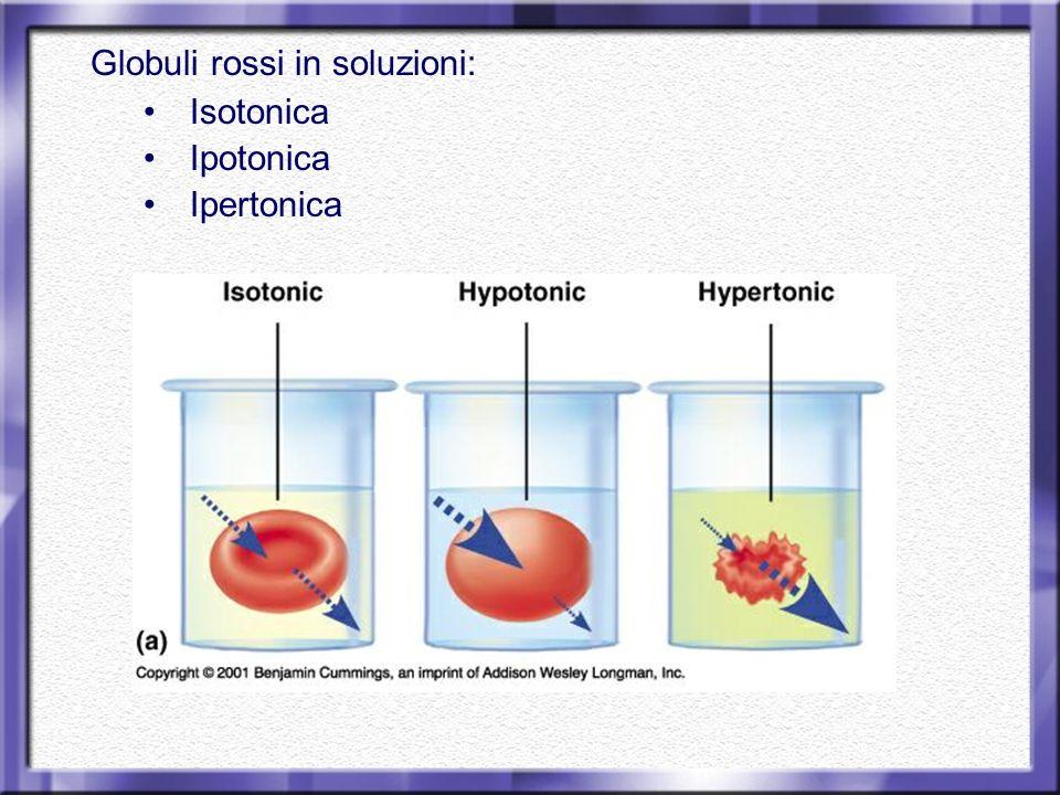 Globuli rossi in soluzioni: Isotonica Ipotonica Ipertonica