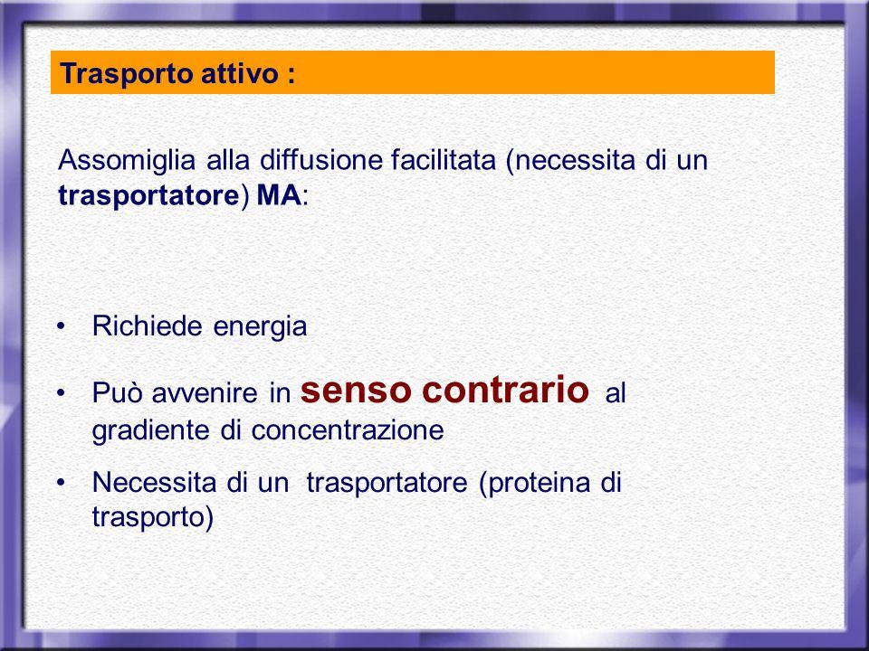 Trasporto attivo : Richiede energia Può avvenire in senso contrario al gradiente di concentrazione Necessita di un trasportatore (proteina di trasport