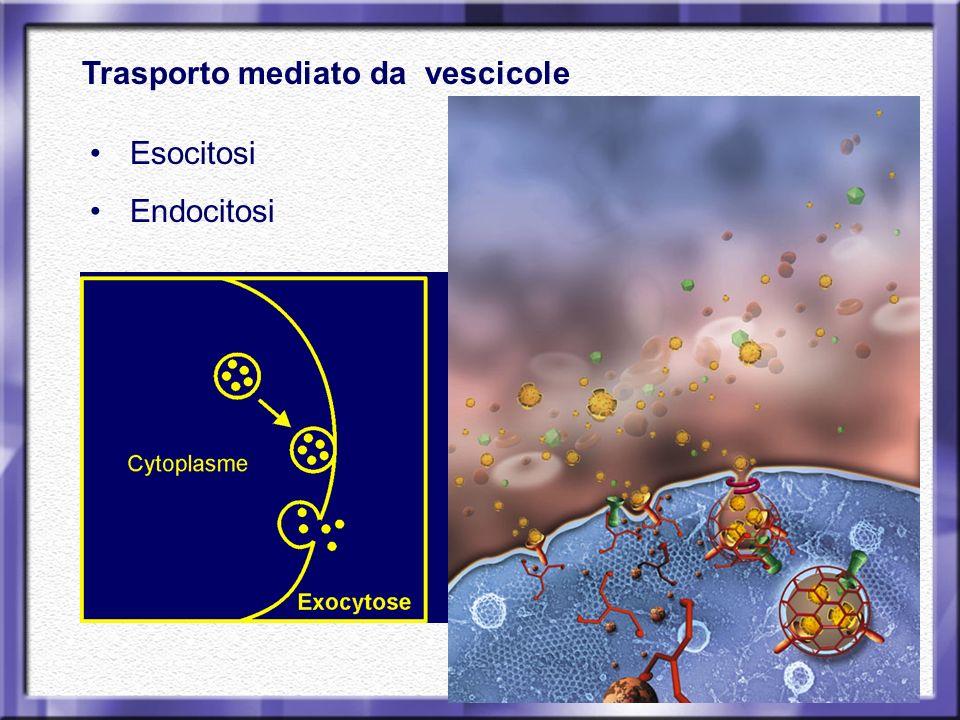 Trasporto mediato da vescicole Esocitosi Endocitosi