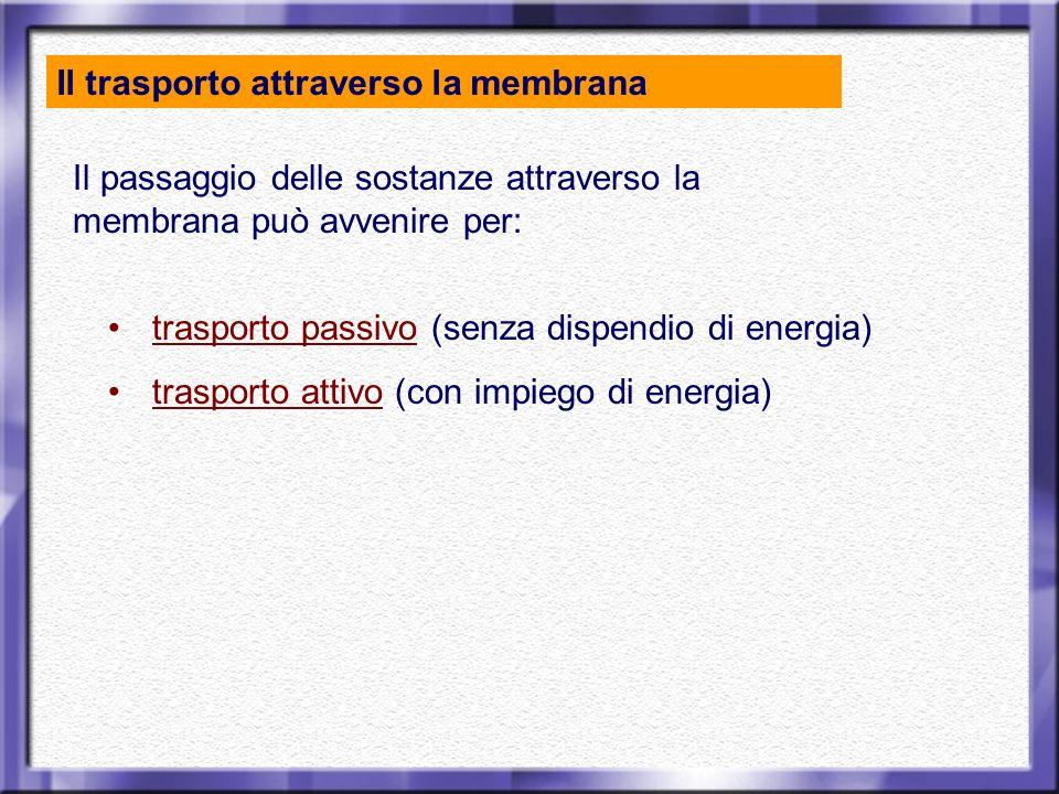 Il passaggio delle sostanze attraverso la membrana può avvenire per: trasporto passivo (senza dispendio di energia) trasporto attivo (con impiego di e