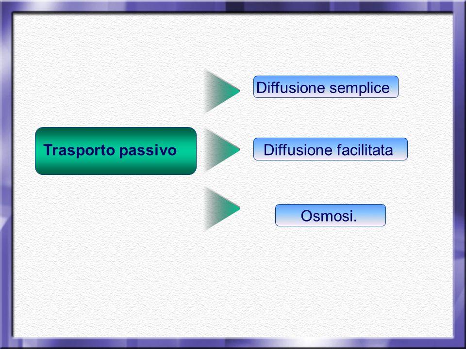 Trasporto passivo Diffusione semplice Diffusione facilitata Osmosi.