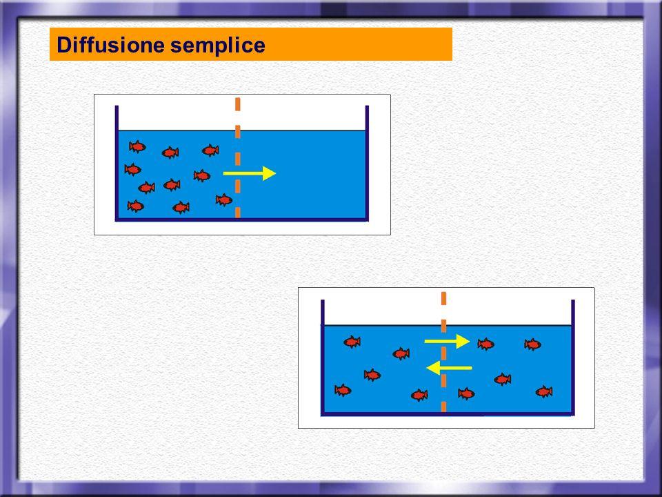 Una sostanza si sposta seguendo il gradiente di concentrazione : dalla zona più concentrata alla zona meno.