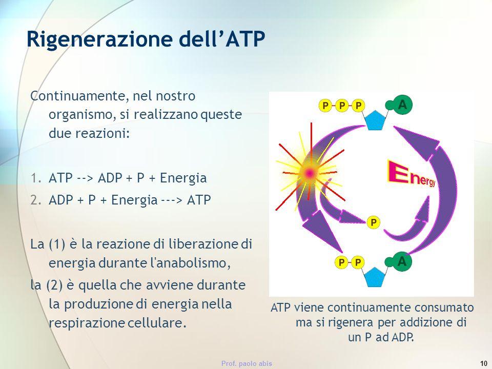 Prof. paolo abis10 Rigenerazione dellATP Continuamente, nel nostro organismo, si realizzano queste due reazioni: 1.ATP --> ADP + P + Energia 2.ADP + P