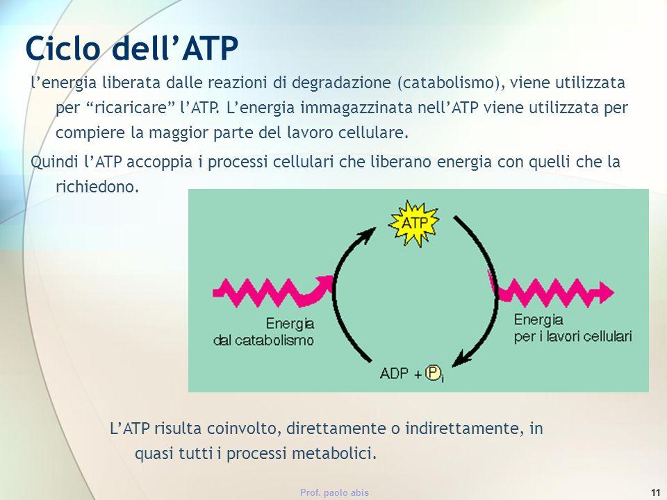 Prof. paolo abis11 lenergia liberata dalle reazioni di degradazione (catabolismo), viene utilizzata per ricaricare lATP. Lenergia immagazzinata nellAT