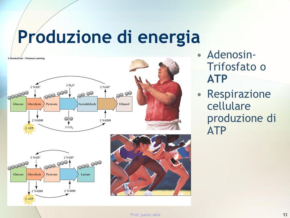 Prof. paolo abis13 Produzione di energia Adenosin- Trifosfato o ATP Respirazione cellulare produzione di ATP