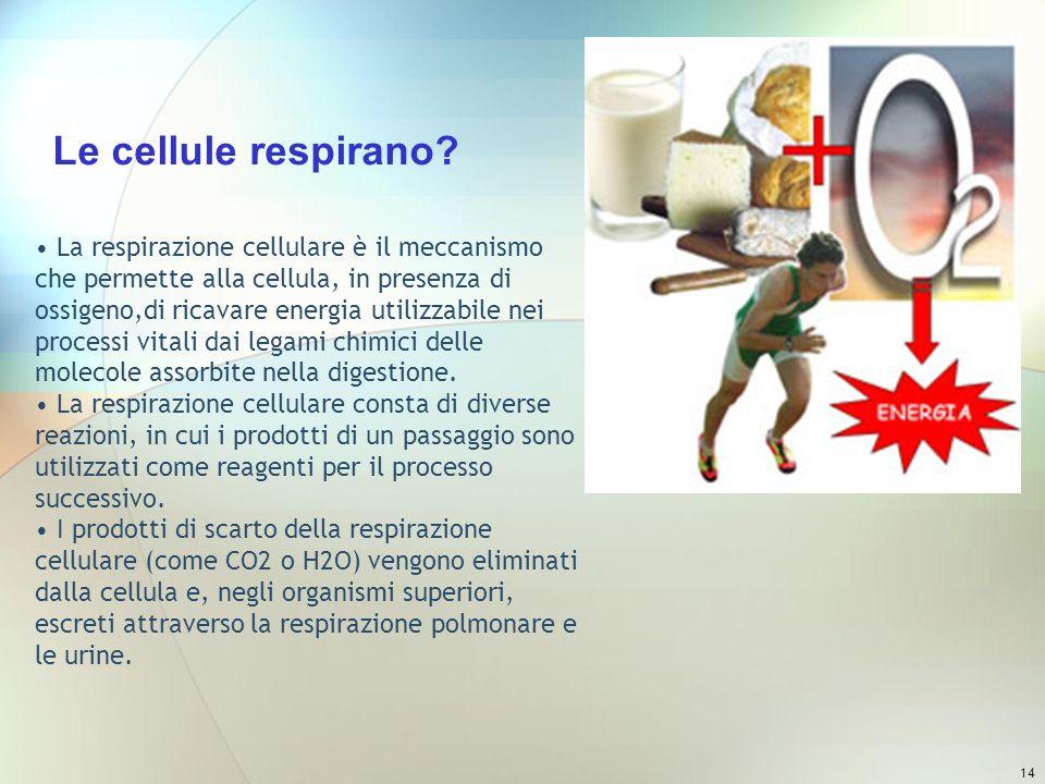 14 La respirazione cellulare è il meccanismo che permette alla cellula, in presenza di ossigeno,di ricavare energia utilizzabile nei processi vitali d