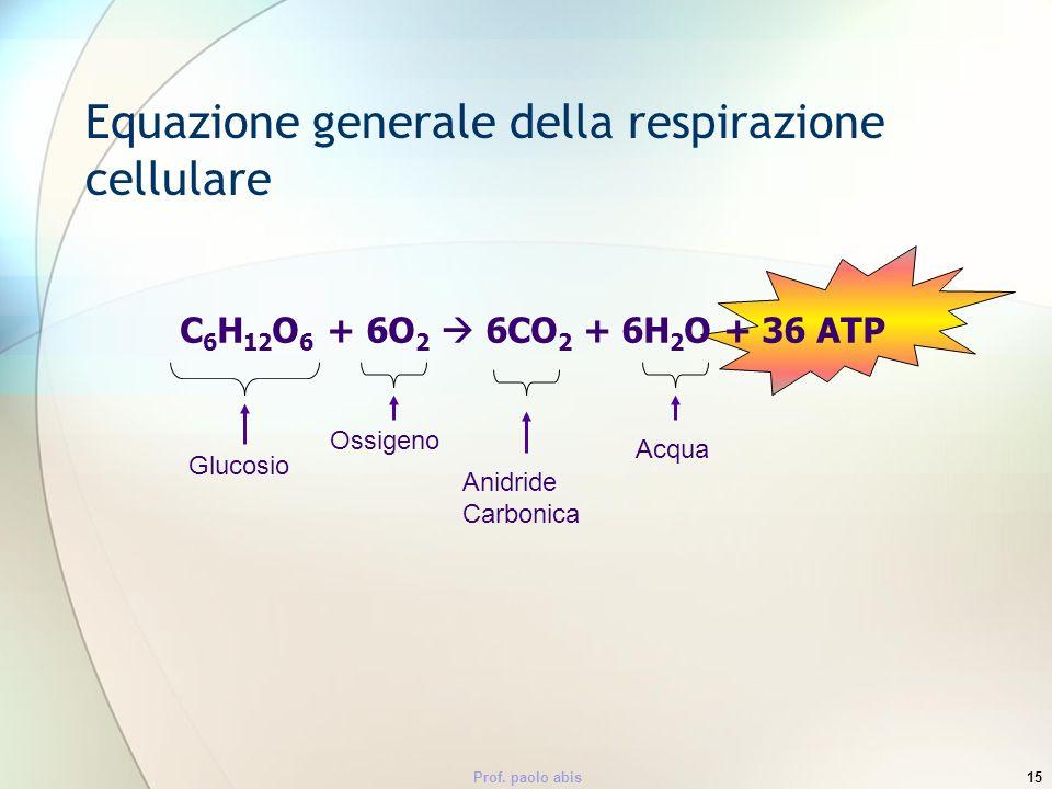 Prof. paolo abis15 Equazione generale della respirazione cellulare C 6 H 12 O 6 + 6O 2 6CO 2 + 6H 2 O + 36 ATP Glucosio Ossigeno Anidride Carbonica Ac