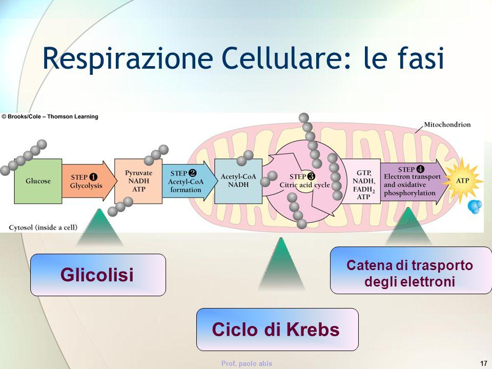 Prof. paolo abis17 Respirazione Cellulare: le fasi GlicolisiCiclo di Krebs Catena di trasporto degli elettroni